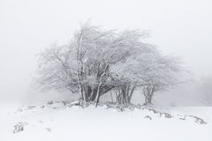 Dimmigt vinterlandskap i skogen Arkivfoton