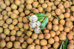 Dimocarpus longan bee Royalty Free Stock Photos