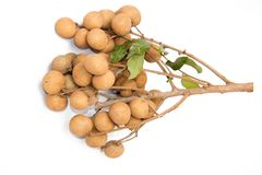 Dimocarpus longan Stock Photo