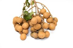 Dimocarpus longan Royalty Free Stock Photo