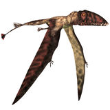 Dimorphodon in Flight Stock Photography
