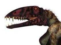 Dimorphodon Reptielhoofd vector illustratie