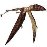 Dimorphodon in volo Fotografia Stock
