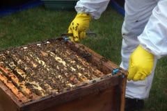 Dimostrazione di conservazione di ape alla manifestazione Immagine Stock