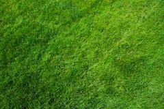 din textur för illustrationsgräsillustration Klipp nytt bakgrund för grönt gräs naturligt gräs klippt lawn arkivfoto