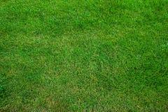 din textur för illustrationsgräsillustration Klipp nytt bakgrund för grönt gräs naturligt gräs klippt lawn royaltyfri bild