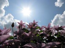 din trädgårds- sommartid Arkivbild