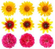Dina favorit- sommarblommor är solrosor och rosor fotografering för bildbyråer