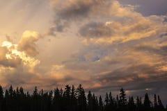 dina trees för avståndssolnedgångtext Royaltyfri Fotografi