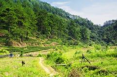 A Dinamarca Hong Pao Tea Fields wuyishan Fotografia de Stock Royalty Free