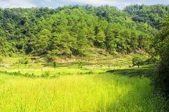 A Dinamarca Hong Pao Tea Fields wuyishan Fotos de Stock