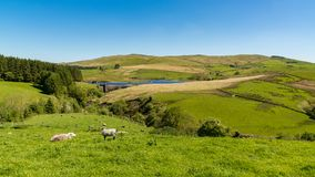 Dinas Reservoir, Ceredigion, Wales, UK Stock Photography