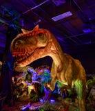 Dinasours avslöjade - allosaurusen Arkivbilder