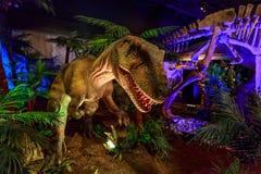 Dinasours avslöjade - Yangchuanosaurus Arkivfoto