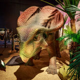 Dinasours ha dissotterrato - Protoceratops Fotografie Stock