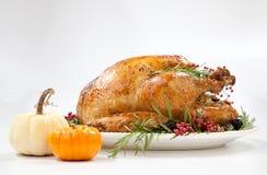 Dinde de thanksgiving sur le blanc Photo libre de droits