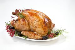 Dinde de thanksgiving sur le blanc Images stock