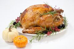 Dinde de thanksgiving sur le blanc Photos stock