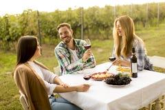 Diner in wijngaard stock foto's