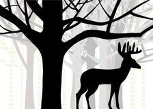 Dineral o venados de cola blanca que se colocan en el bosque de los árboles del roble y de abedul stock de ilustración