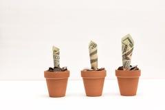 Dinero creciente Fotografía de archivo libre de regalías