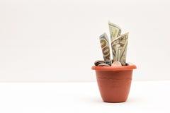 Dinero creciente Imagen de archivo