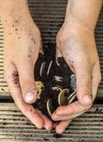 Dinero de la tierra, manos imagenes de archivo
