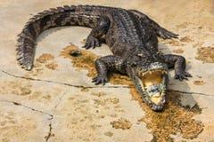 Dinero dentro de la boca del cocodrilo, mundo del cocodrilo, Tailandia Imagen de archivo