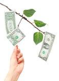 Dinero que crece de árbol Foto de archivo libre de regalías