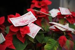 Dinero que ofrece en Vietnam por Año Nuevo chino en poinsettia Imagenes de archivo