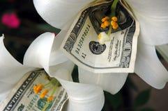 Dinero y flor 2 imagen de archivo