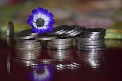 Dinero y flor delicada Imagen de archivo libre de regalías