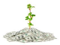 Dinero y planta imagenes de archivo
