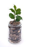 Dinero y planta Fotografía de archivo