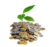 Dinero y planta Imagen de archivo libre de regalías