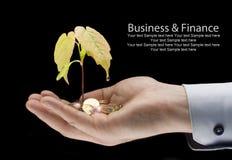 Dinero y planta con la mano - financie el nuevo negocio Imágenes de archivo libres de regalías
