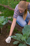 ding λαχανικό κήπων στοκ εικόνες
