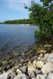 Ding Darling National Wildlife Refuge, mening van meer, mangroven en witte pelikanen op water op achtergrond. Stock Foto's