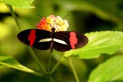 Ding Dong, suo la farfalla del postino fotografie stock libere da diritti
