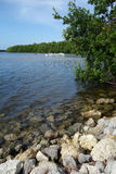 Ding Kochany Krajowy rezerwat dzikiej przyrody, widok jezioro, mangrowe i biali pelikany na wodzie w tle. Zdjęcia Stock