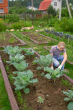 Weеding un jardín vegetal Fotos de archivo