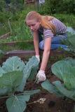 Weеding a vegetable garden Stock Image