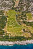 Dingac vineyards on Peljesac peninsula Stock Photography