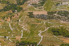 Dingac vineyards on Peljesac peninsula Royalty Free Stock Photos