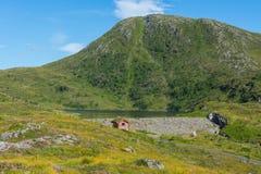 Dinglavatnet около Volda, Ørsta Стоковые Изображения RF