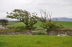 Dingle, Керри графства, Ирландия Стоковая Фотография RF