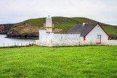 ομο dingle φάρος ιρλανδικών αγελάδων της Ιρλανδίας Στοκ Εικόνες