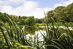 Dingle jezioro w targowym miasteczku Sandbach Anglia Zdjęcia Royalty Free
