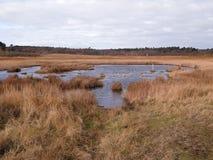 Dingle moerassen, Suffolk royalty-vrije stock foto's