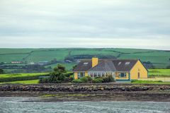 Dingle Penisula, ιρλανδική αγελάδα κομητειών, Ιρλανδία Στοκ Εικόνες